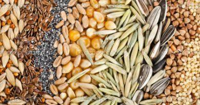 фитиновая кислота в зернах, бобовых, орехах, семенах